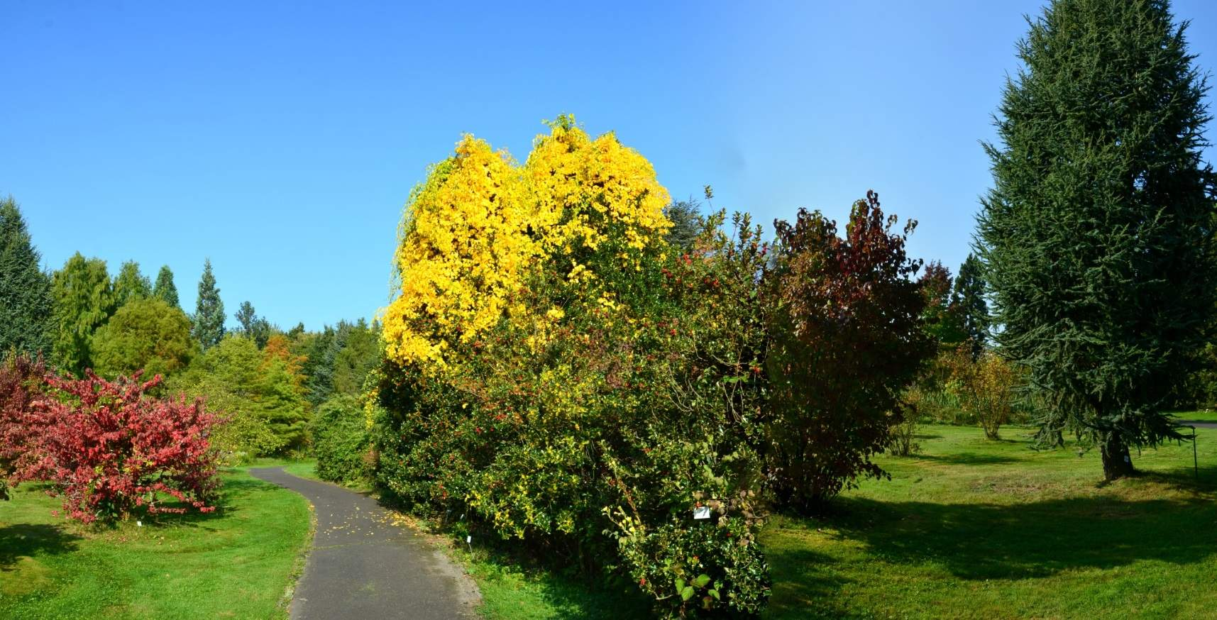 botanischergarten marburg b844df9d 5dac 4425 ac26 6a bf36f