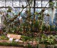 Botanischer Garten Marburg Neu orchideenschau Im Botanischen Garten Marburg Deutsche