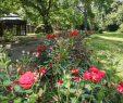 Botanischer Garten Marburg Reizend Marburg Umsetzung Von Parkpflegewerk Im Alten Botanischen