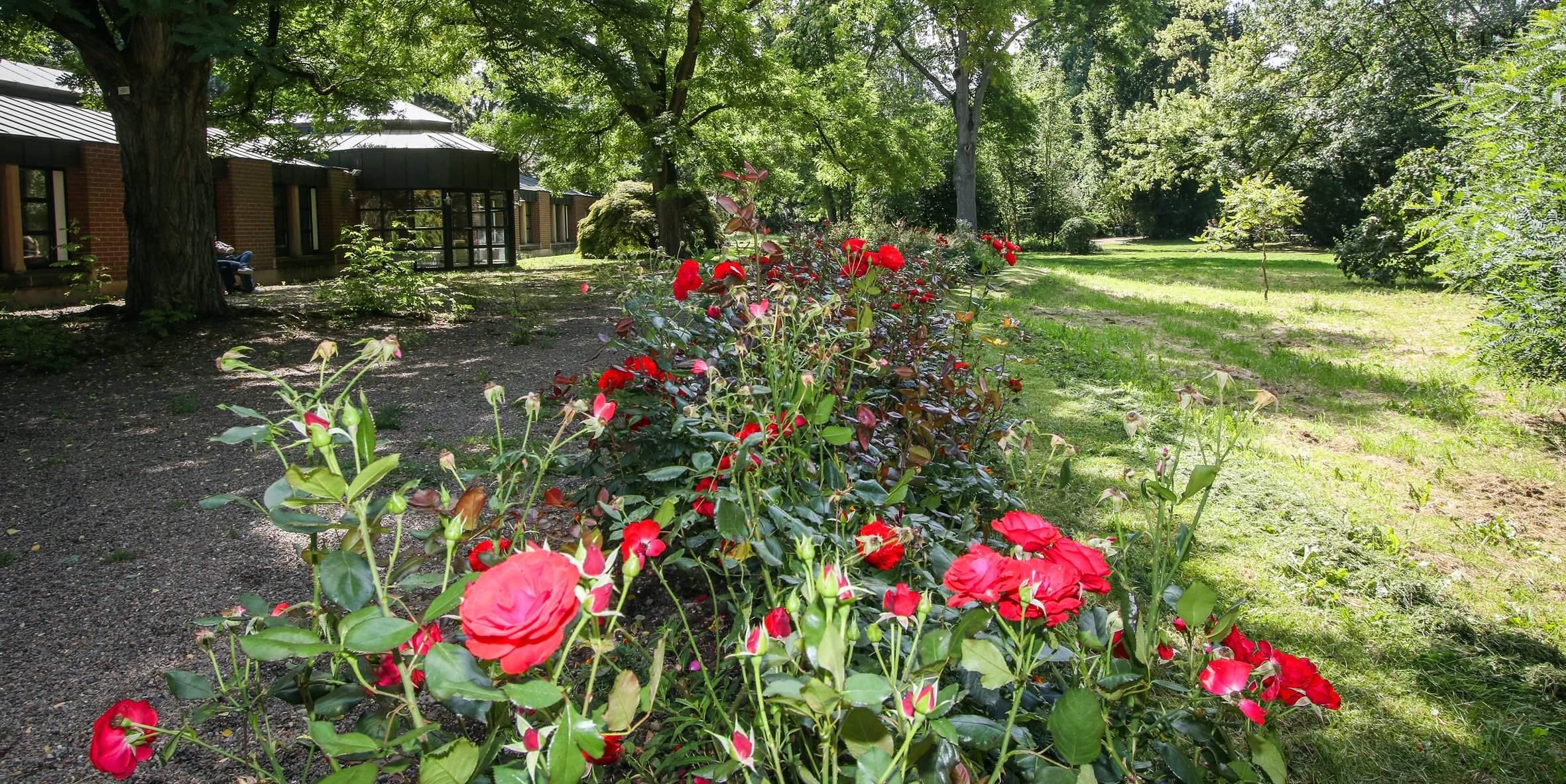 Rosenbeet im Uni Park erhaelt Erweiterung master reference
