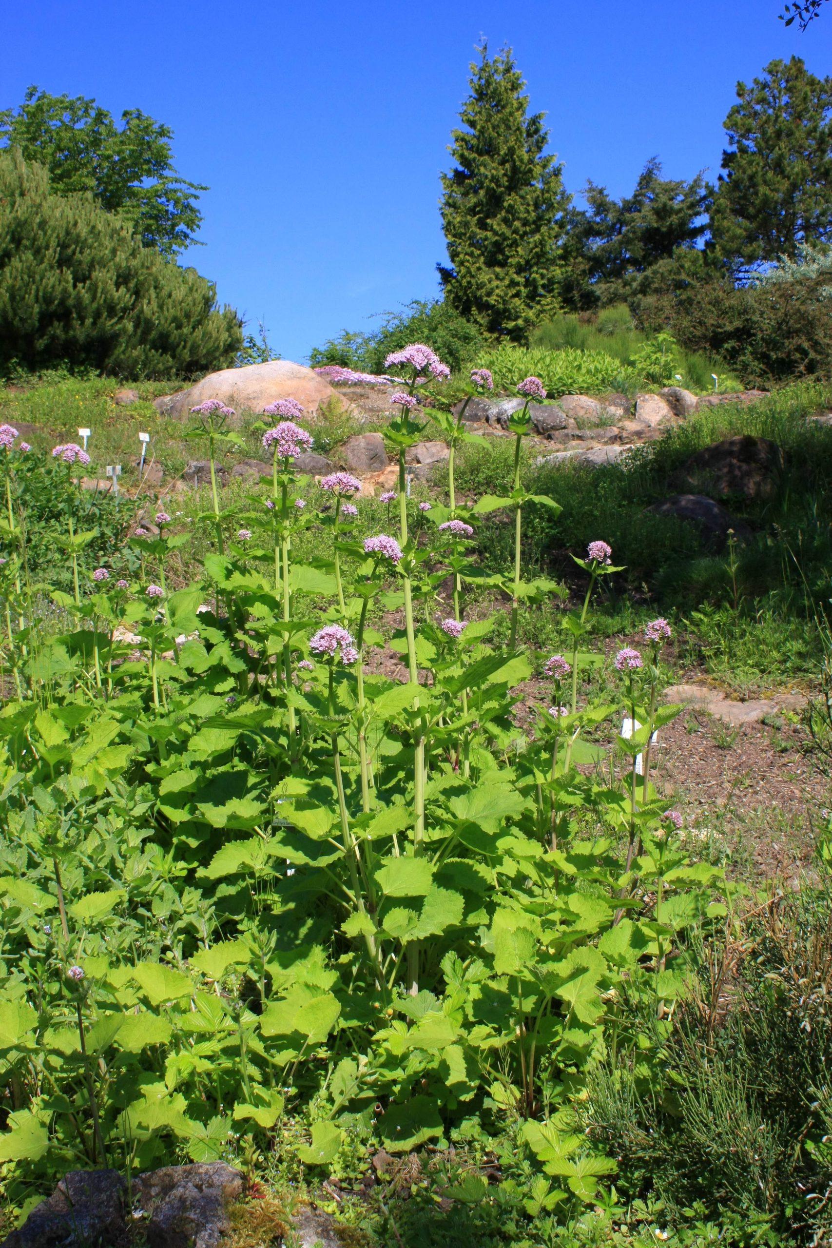 Botanischer Garten Marburg Schön Datei Neuer Botanischer Garten Marburg 0014 –