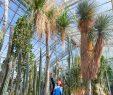 Botanischer Garten München Genial Botanischer Garten München Vor 100 Jahren Wurde Das