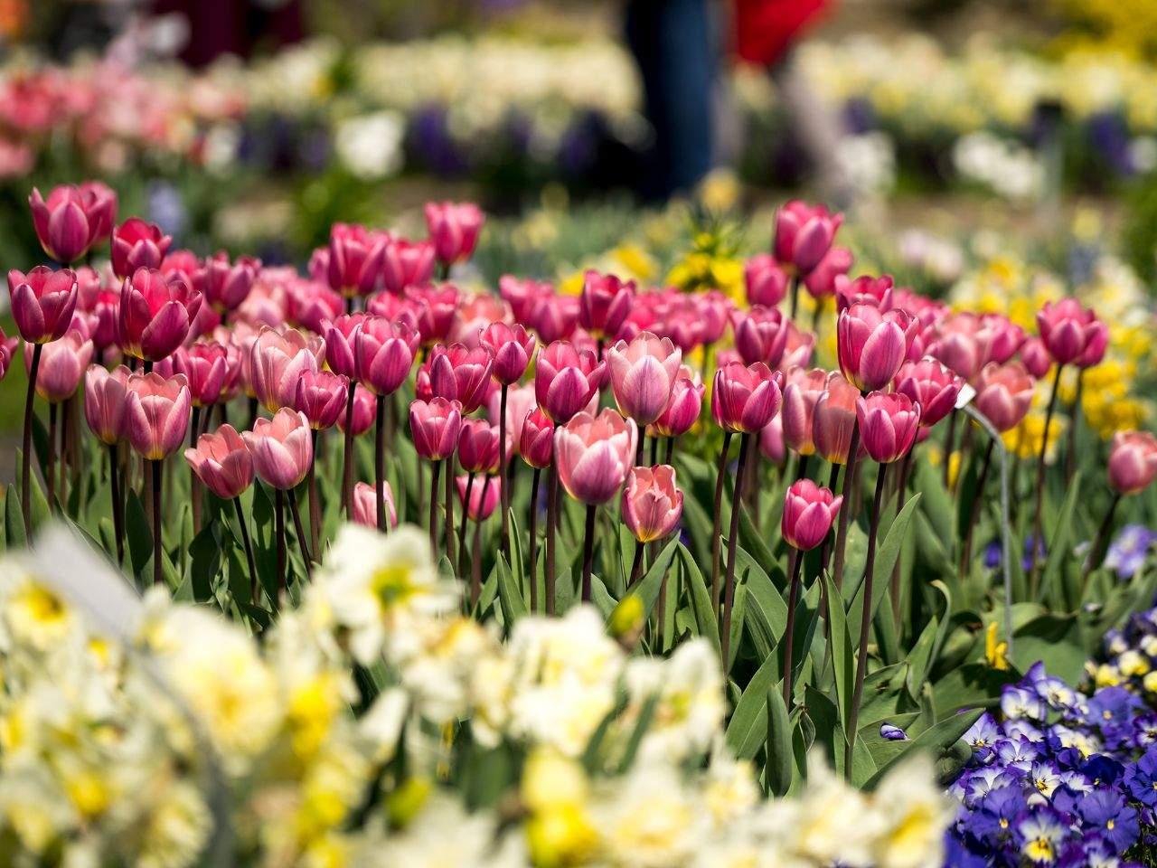 Botanischer Garten München Inspirierend Botanischer Garten In München