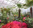Botanischer Garten München Reizend Botanischer Garten Muenchen 01 03 2015