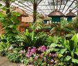 Gärten Der Welt Berlin Genial Gärten Der Welt