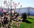 Gärten Der Welt Berlin Inspirierend Berlin Marzahn Unbekannte Fällen Kirschbäume In Den Gärten