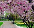 Gärten Der Welt Berlin Inspirierend Gärten Der Welt In Berlin Japanische Botschaft Bedauert