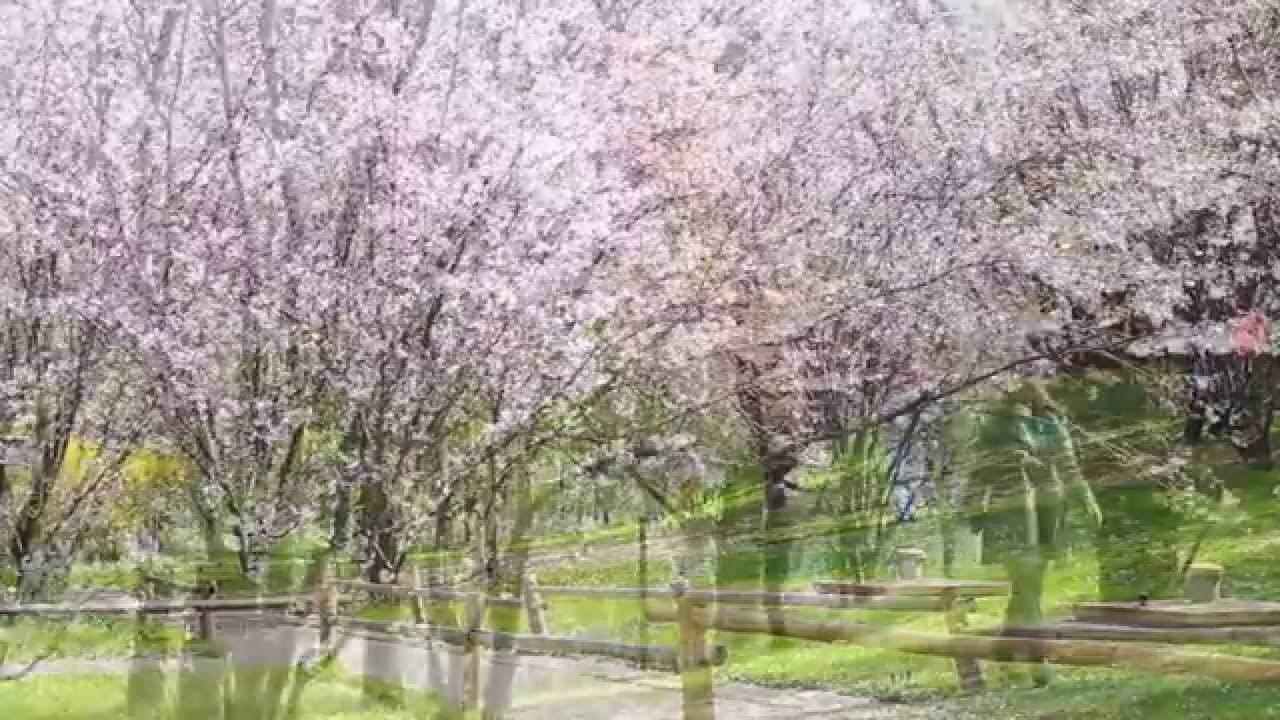 Gärten Der Welt Berlin Schön Frühling In Berlin Kirschblüten In Den Gärten Der Welt