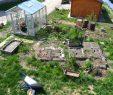 Garten Gestalten Das Beste Von Verwildeter Garten so Fängst Du An Haus Und Beet