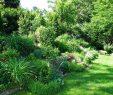 Garten Gestalten Einzigartig Mein Erdwall Bilder Und Fotos