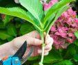 Garten Gestalten Mit Wenig Geld Luxus Kleinen Garten Gestalten Mit Wenig Geld Nützliche Tipps
