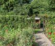 Garten Gestalten Mit Wenig Geld Luxus Sichtschutz Ideen Für Den Garten