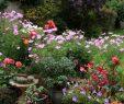 Garten Gestalten Schön Garten Anlegen Und Pflegen Schritt Für Schritt Zu Ihrem