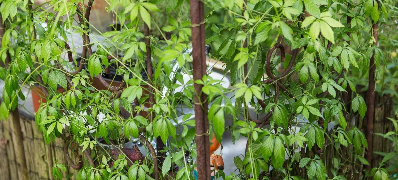 Garten Sichtschutz Einzigartig Sichtschutz Ideen Für Den Garten