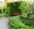 Garten Sichtschutz Einzigartig Sichtschutz Mit Hecken Kletterpflanzen Und Ziergräsern