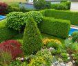 Garten Sichtschutz Frisch Sichtschutz Mit Hecken Kletterpflanzen Und Ziergräsern
