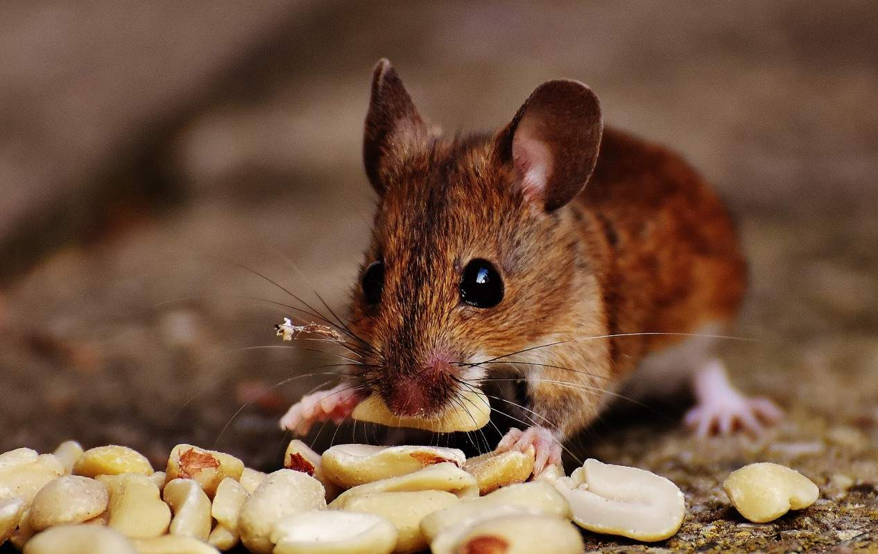 mouse 1920 1266x800