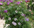 Mein Schöner Garten forum Genial Pin by Marija Mitrović On Plants