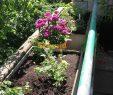 Mein Schöner Garten forum Inspirierend Bodendeckerrosen Rosen forum Garten forum