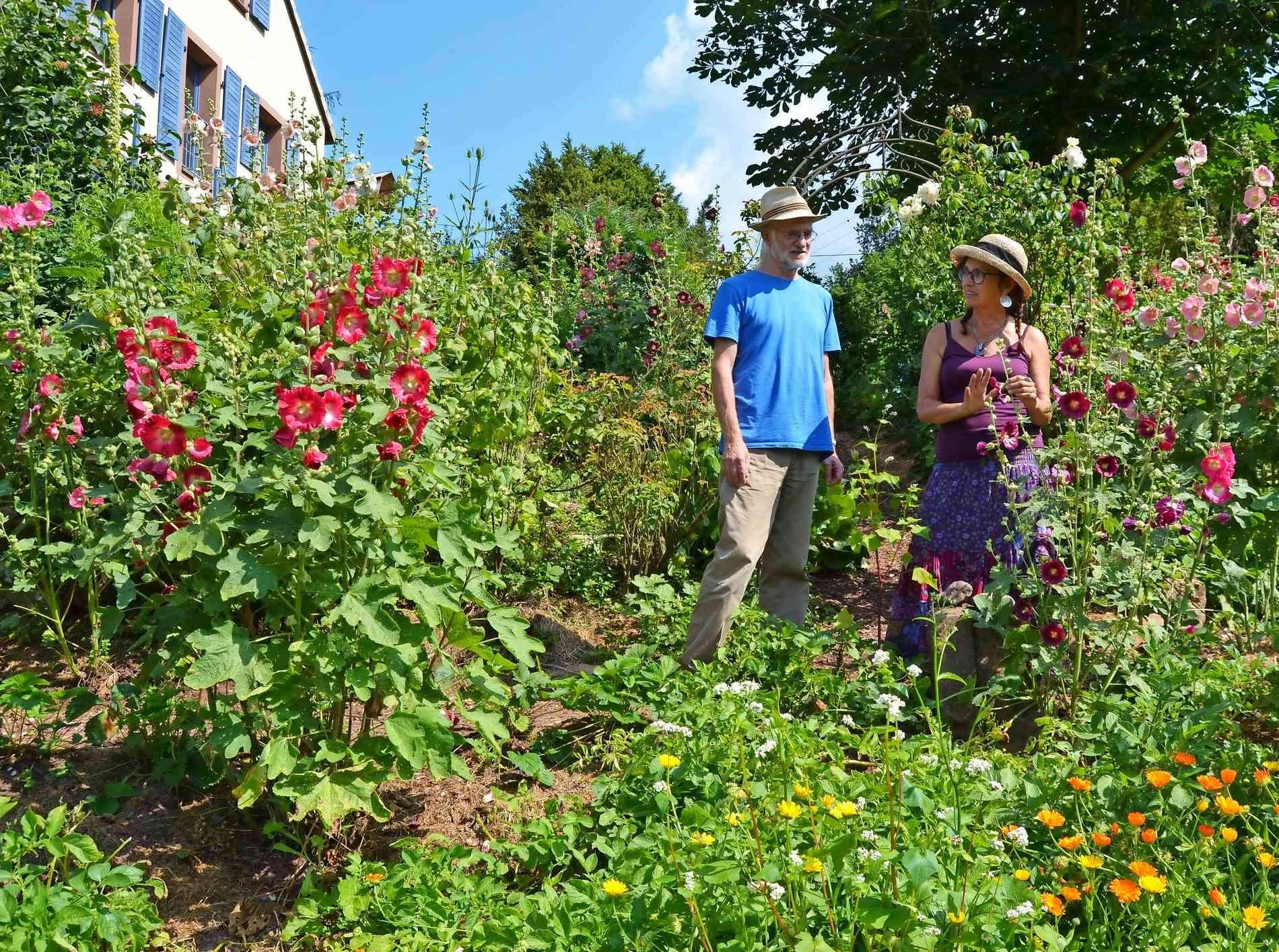 Mein Schöner Garten forum Inspirierend Mein Schöner Garten sommerfreude Mit Stockrosen