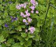 Mein Schöner Garten forum Inspirierend Wer Kennt Se Blume Mein Schöner Garten forum