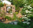 Mein Schöner Garten forum Luxus Gartenforum Zeigt Her Eure Gärten Seite 8
