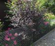 Mein Schöner Garten forum Luxus Welcher Strauch ist Das Mein Schöner Garten forum