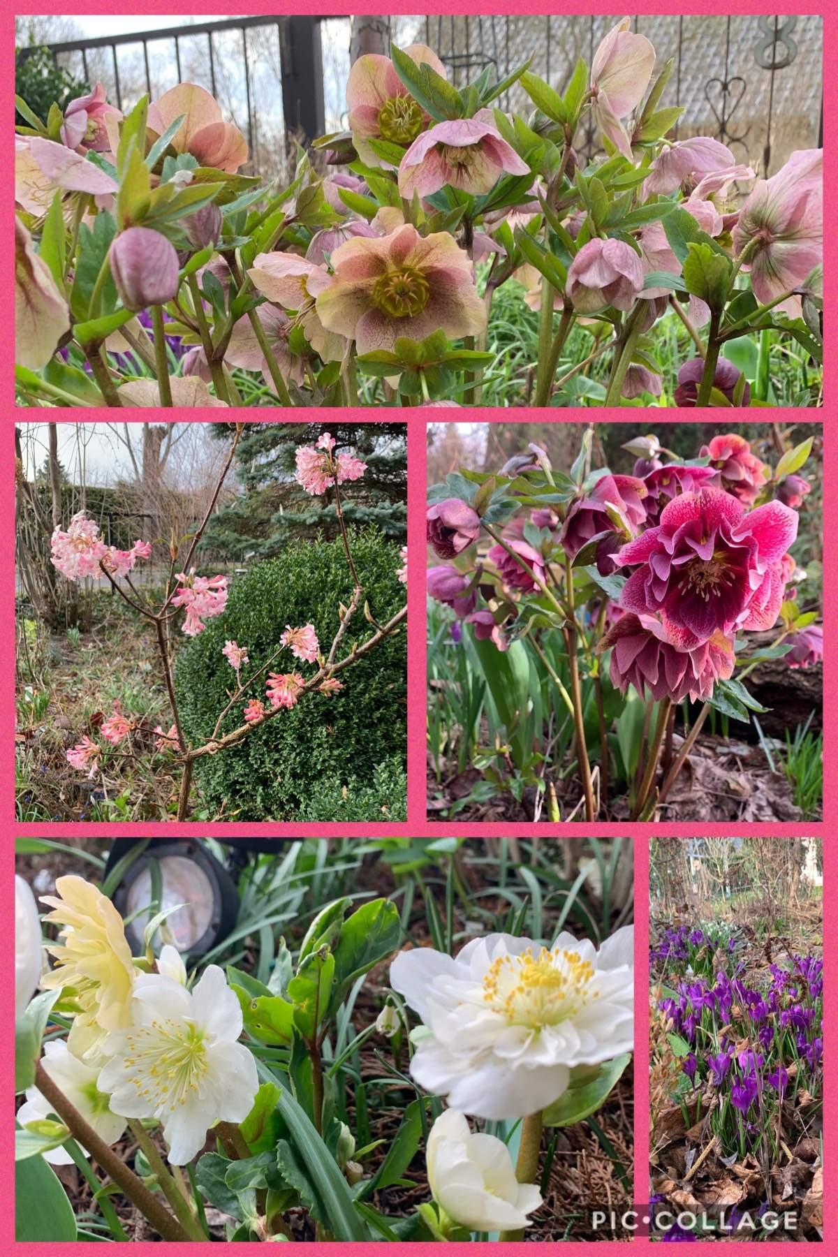 Mein Schöner Garten forum Neu Foto Collagen Page 4 Mein Schöner Garten forum