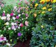 Mein Schöner Garten forum Neu Stimmungsvoller Im September Mein Schöner Garten forum