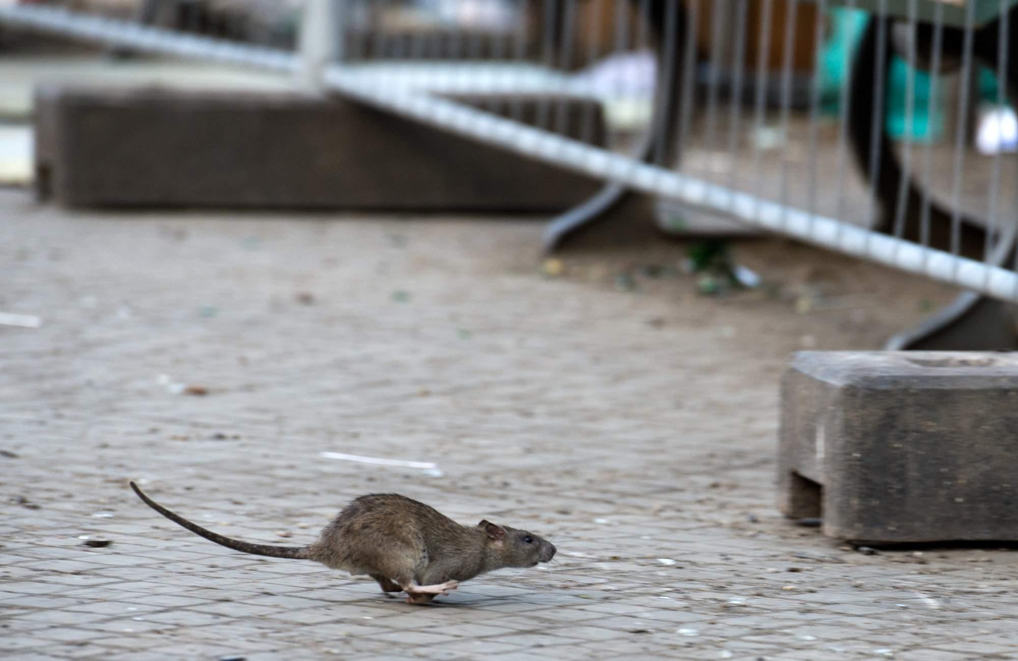 bremen stadt artikel ratten stoeren anwohner in der bremer vahr arid