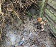 Ratten Im Garten Inspirierend Dagmar Ludwig Kämpft Gegen Ratten In Ihrem Garten Und Muss