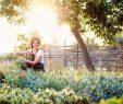 Schöne Gärten Einzigartig Schöne Gärten Entspannen Im Natürlichen Lebensraum