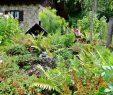 Schöne Gärten Frisch Schöne Gärten Entlang Des Weges Back Hiker