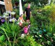 """Schöne Gärten Inspirierend Serie """"schöne Gärten"""" Ein Para S Auf Engem Raum"""