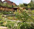 Schöne Gärten Luxus Grütters Am Niederrhein Gartengestaltung Gartenpflege