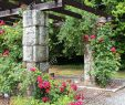 Schöne Gärten Luxus Schöne Gärten Rosen Und Ein Gitter Mit Kletterpflanzen