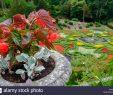 Schöne Gärten Neu Blumentopf Und Schöne Gärten In Lyme Hall Herrenhaus In Peak