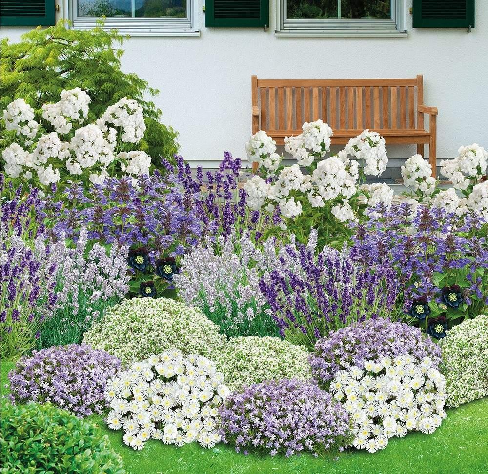 Schöner Garten Elegant Mein Schöner Garten Bienenfreundliches Staudenbeet 21 Pflanzen