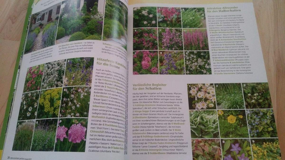"""Schöner Garten Frisch Gartenfachzeitschrift """" Mein Schöner Garten"""""""
