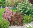 Schöner Garten Luxus Mein Schöner Garten Bienenfreundliche Hecke Im Set 5 Pflanzen