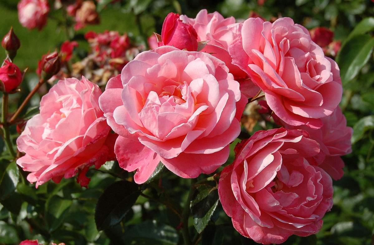 File Mein schöner Garten