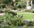 Schweizer Garten Schön Im Vordergrund Tragen Vier Roten Johannisbeerbüsche