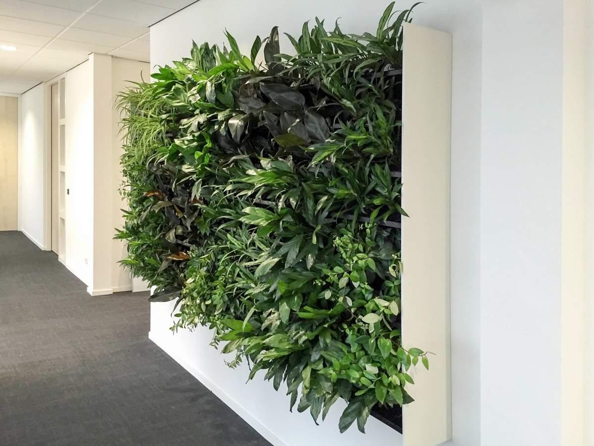 Vertikaler Garten Elegant Pflanzenwand Von Nextgen Als Vertikaler Garten