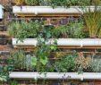 Vertikaler Garten Elegant Vertikale Gärten Anlegen Zum Beispiel Aus Regenrinnen
