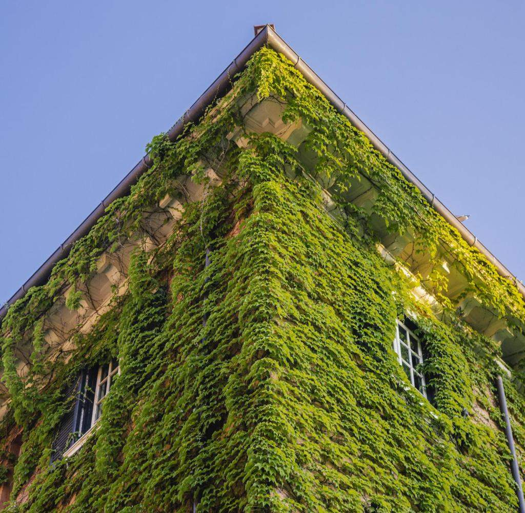 House overgrown with ivy Rome Italy