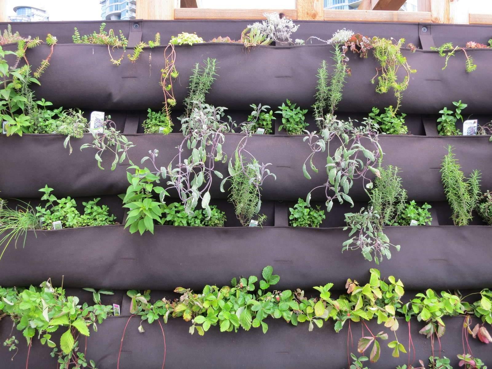 Vertikaler Garten Inspirierend Vertikaler Garten Gärten Bis In Luftige Höhen Anlegen