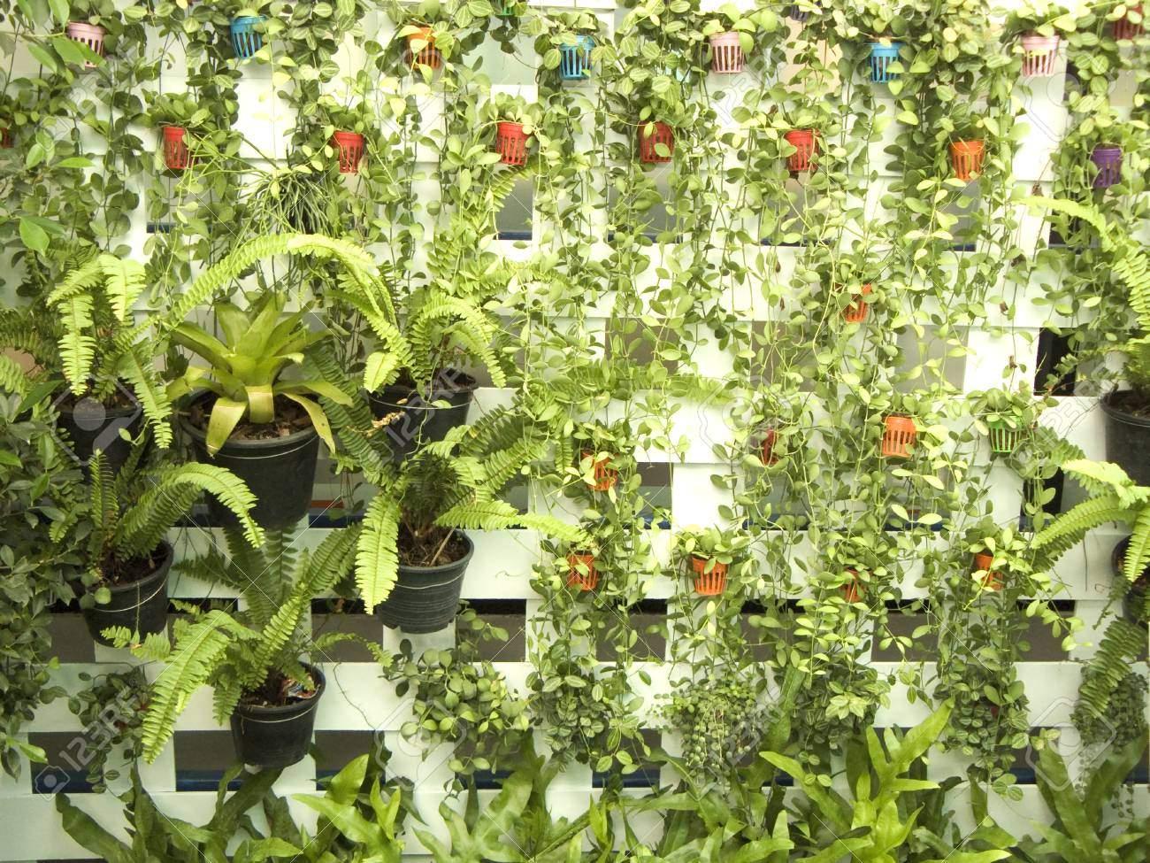 Vertikaler Garten Luxus Stock