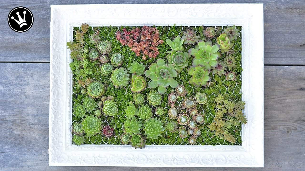 Vertikaler Garten Schön Diy Mit Sukkulenten Bepflanzter Bilderrahmen Vertikaler Garten