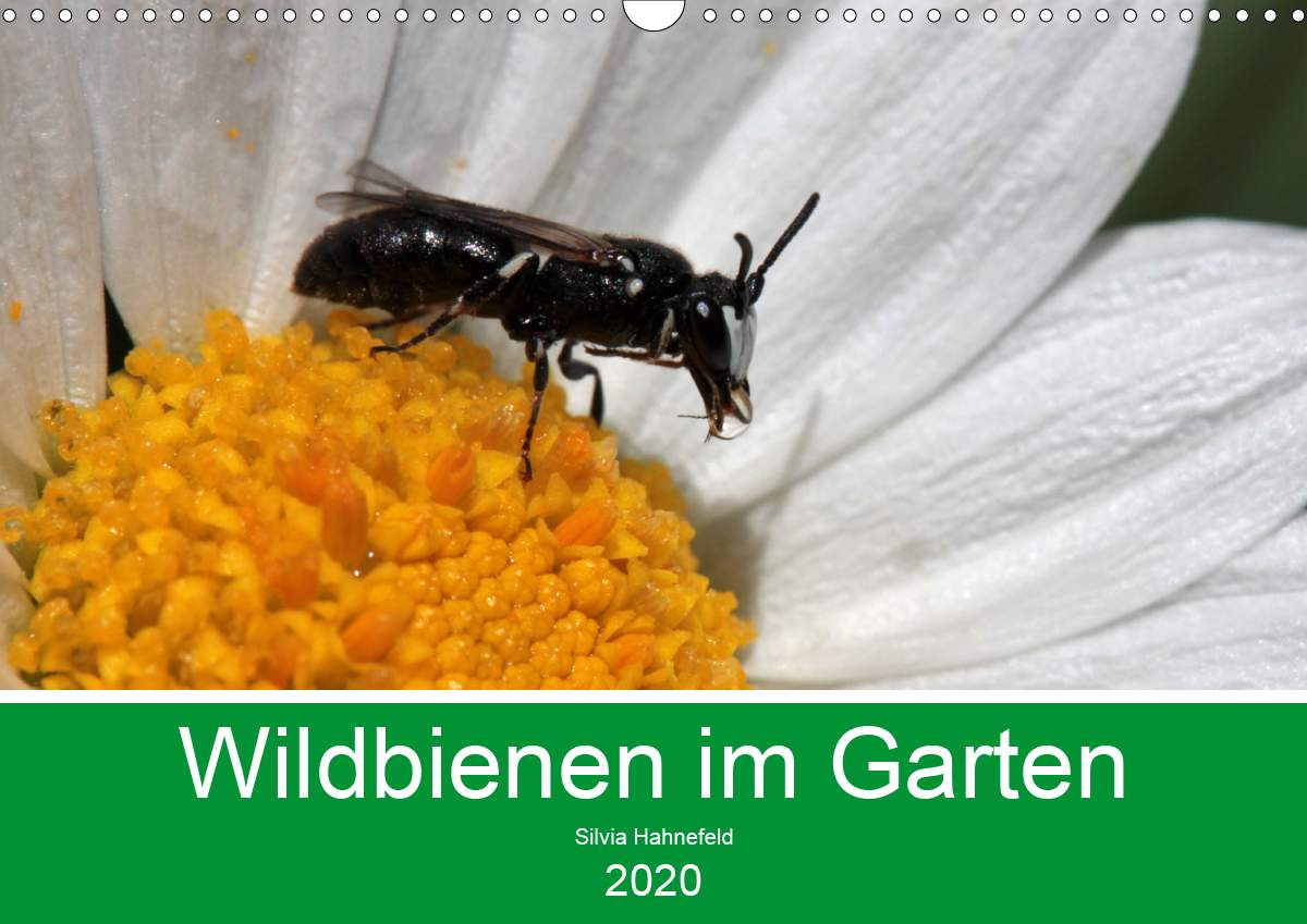 s=tag wildblumen&