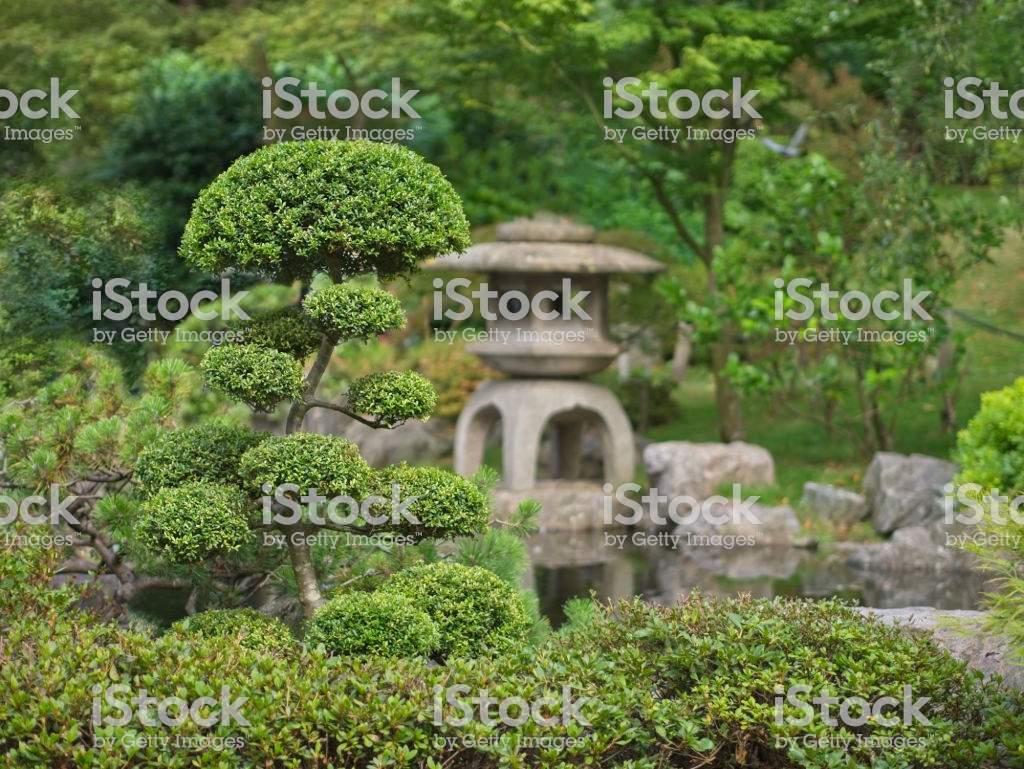 japanischer zen garten mit bonsai und traditionelle steinlaterne gm